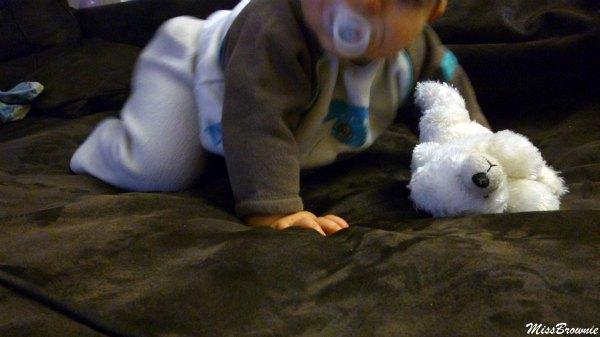 bebe-4-pattes