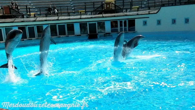 SPECTACLE DAUPHINS ASTERIX
