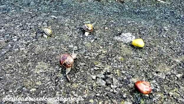 course escargots