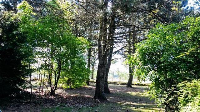 vue cottage center parcs de kempervennen