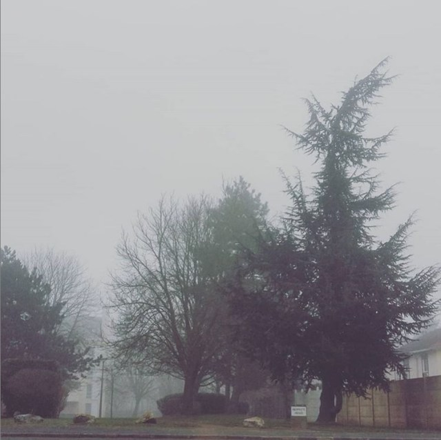 brouillard semaine 8 2019