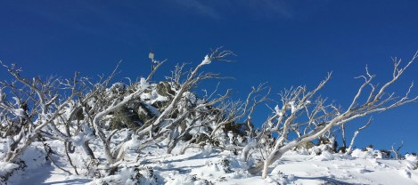 Gums at Guthega on a blue day