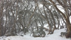 Gums at Kahane loge in snow storm