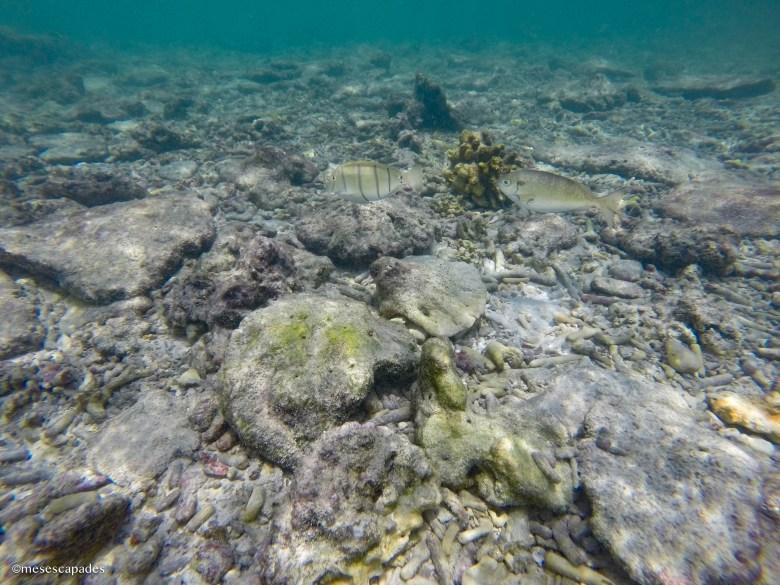 Où faire du snorkeling au Sri Lanka ?