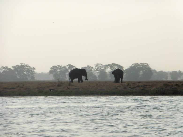 Safari sur la lagune au Sri Lanka