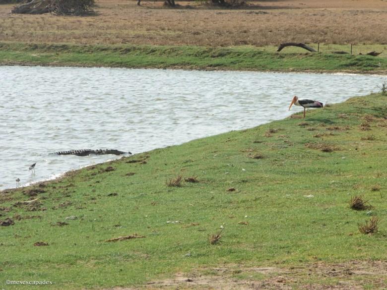 Rencontrer des animaux sauvages a Sri Lanka