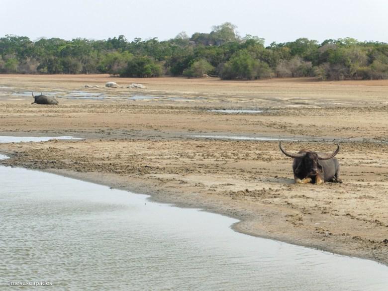 Quels animaux voir au Sri Lanka ?
