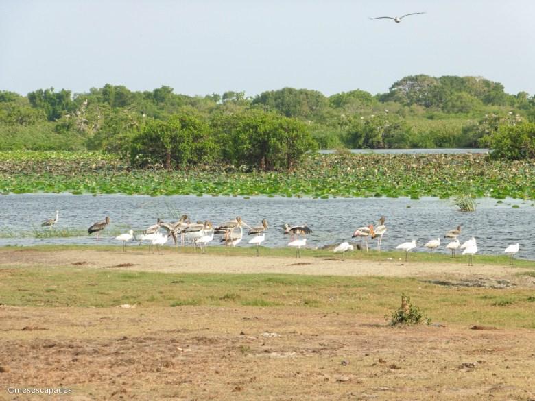 Quel safari choisir au Sri Lanka ?
