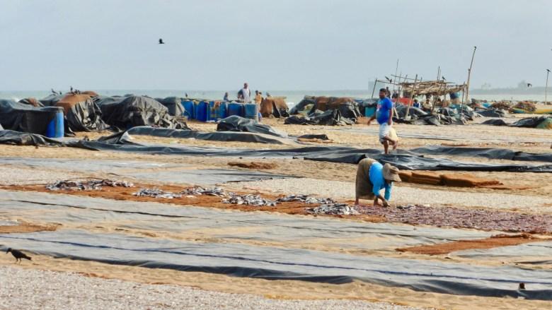 Visiter le marché de poissons de Negombo