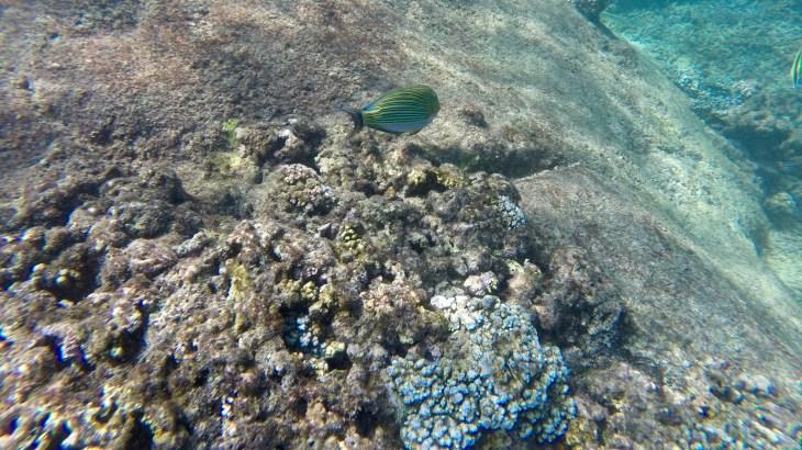 Snorkeling à Pigeon Island situé au large de Trincomalee