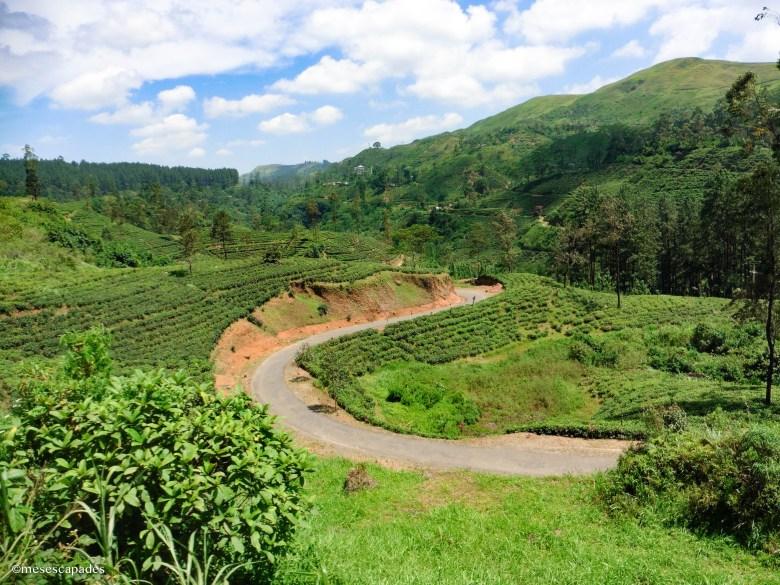 Que faire au Sri Lanka en 3 semaines