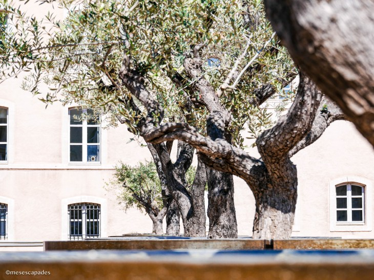 Les oliviers, à proximité du vieux port de Marseille