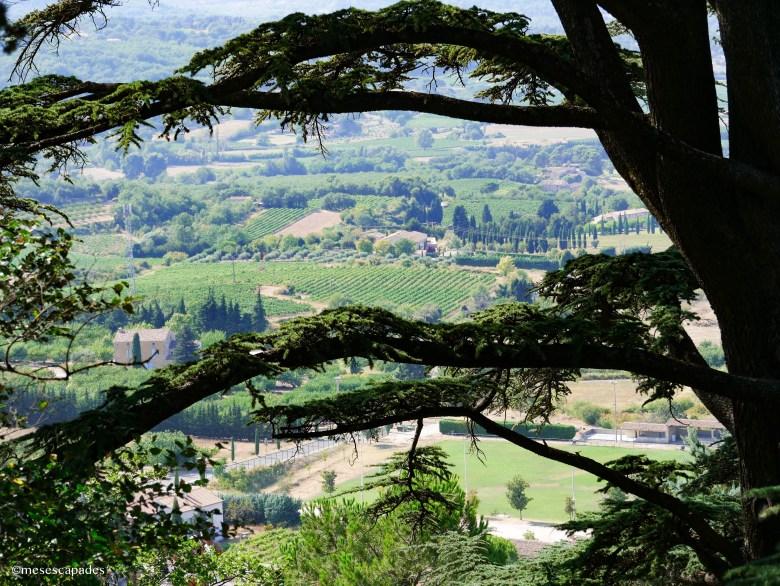 Vue à travers les arbres au sommet de Bonnieux