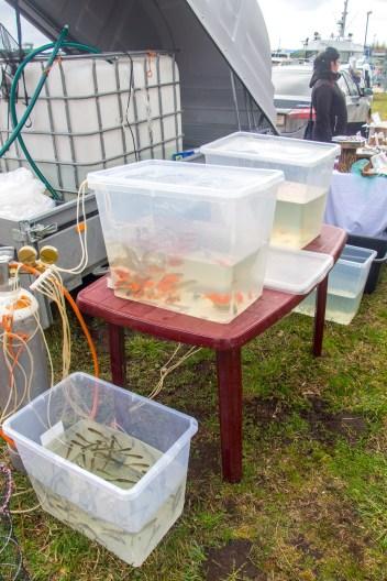 Varnja kalalaat 2018. Tiigikalade müük.