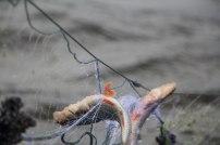 2016 Varnja kalalaat 273