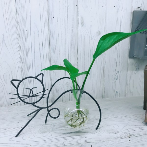 Cat Hydroponic Glass Planter