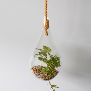 Glass Teardrop Terrarium