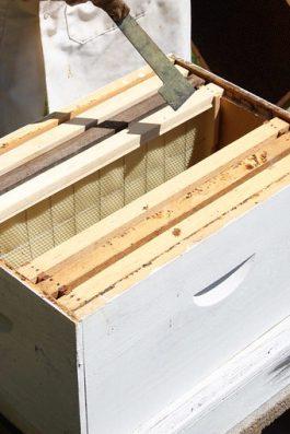 installer ruche bois
