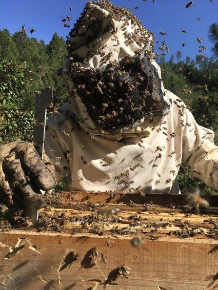 attaque abeilles apiculteur