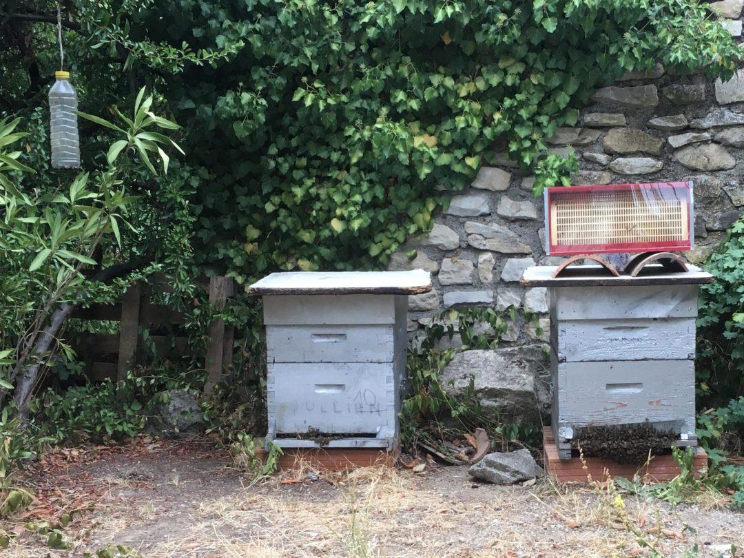 ruche apiculteur amateur