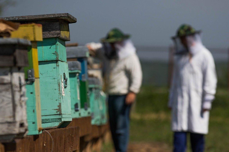 Commencer l'apiculture avec son père et des ruches Voirnot – Interview #5 – Pierre