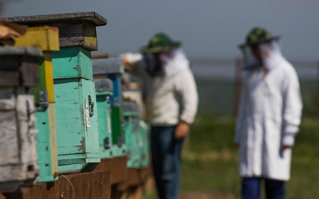 Interview #5 – Pierre – Commencer l'apiculture avec son père et des ruches Voirnot