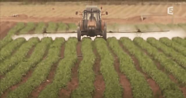 Champ abeilles pesticides