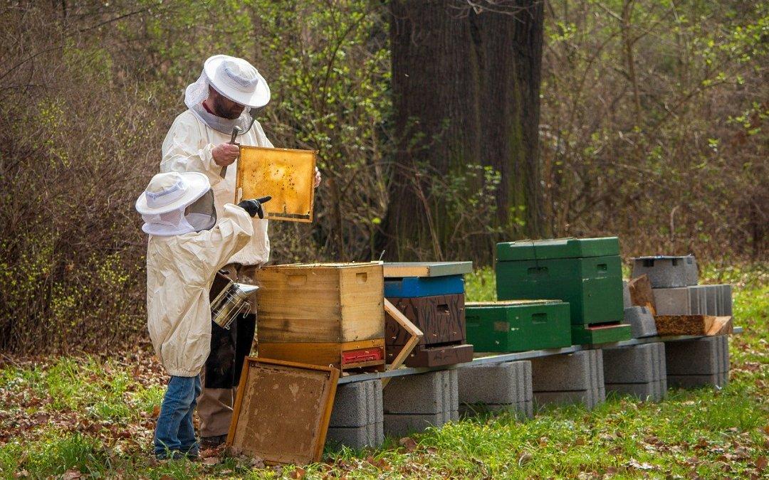 Les 99 raisons de faire de l'apiculture: l'importance d'avoir un objectif