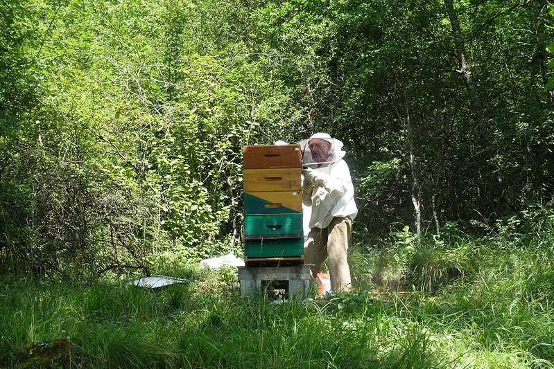 visiter ruche