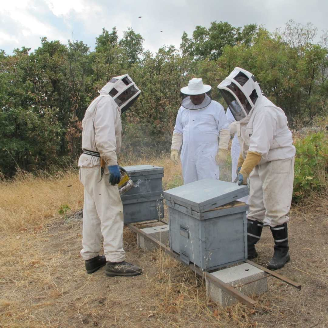 visite ruche layens