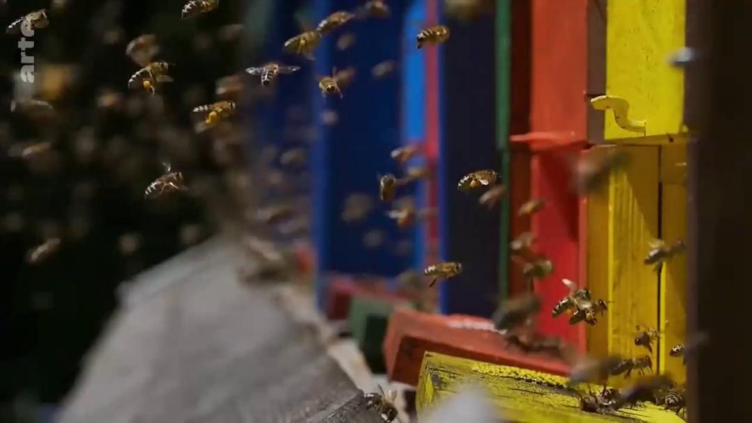envol abeilles