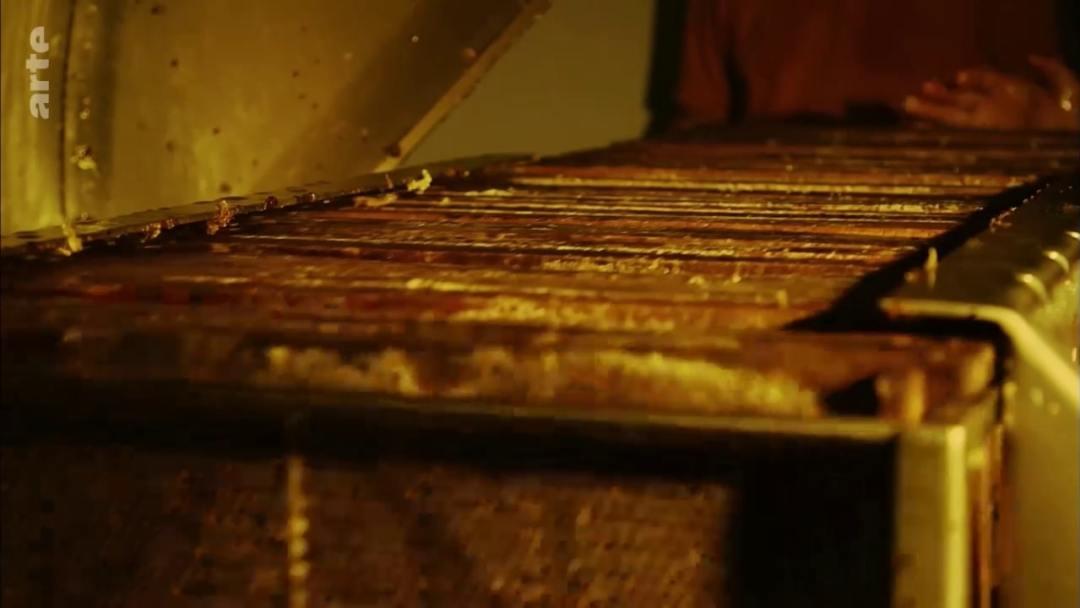 cadre miel hausse