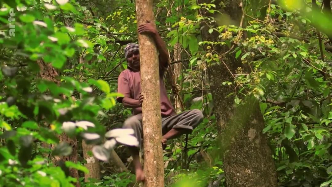apiculteur monter arbre
