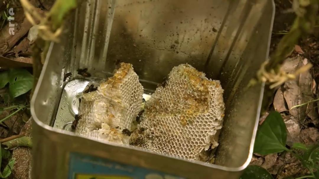 recipient recolte miel