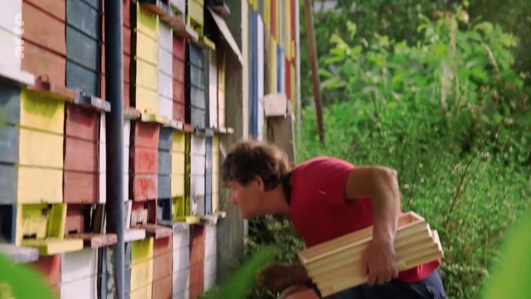 observation envol abeilles