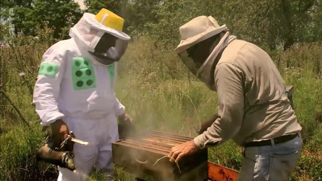 ouverture ruche