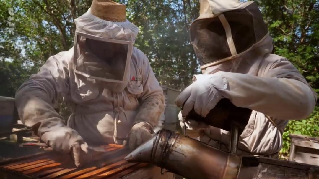 visite ruche apiculteurs