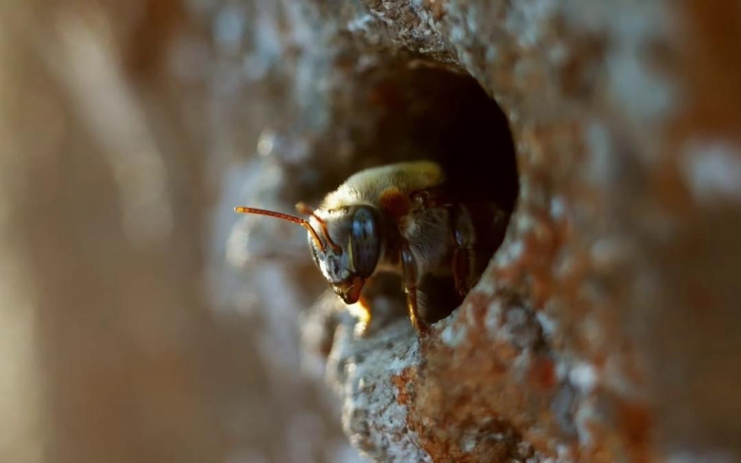 Le protecteur des abeilles melipones – Episode 6 – Les maîtres des abeilles