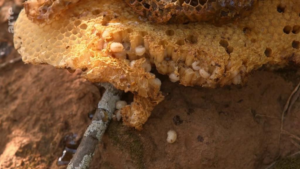 nourriture larves oeufs