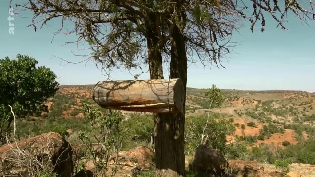 ruche tronc arbre