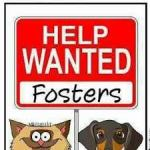 We Care for Animals is Looking for Foster Homes
