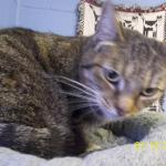Featured Shelter Animals July 18, 2014
