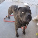 Featured Shelter Animals and Tips Oct. 3, 2014