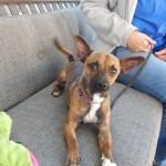 Mesquite Animal Shelter Pet Listing February 24, 2017