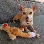 Mesquite Shelter Pet listing 9/1/17