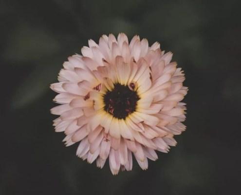 Recettes naturelles : beauté, maison
