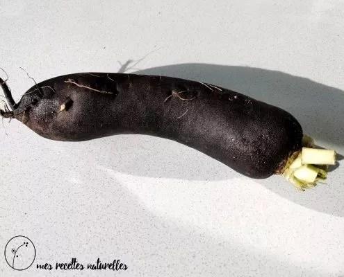 Le radis noir : usage médicinal