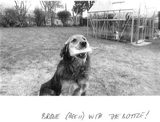 Brodie Dog with Message in a Bottle