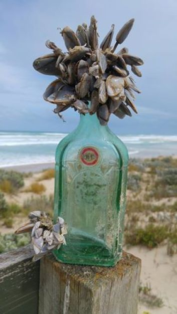 Chinese Message in a Bottle - John Morrissey's Find 2