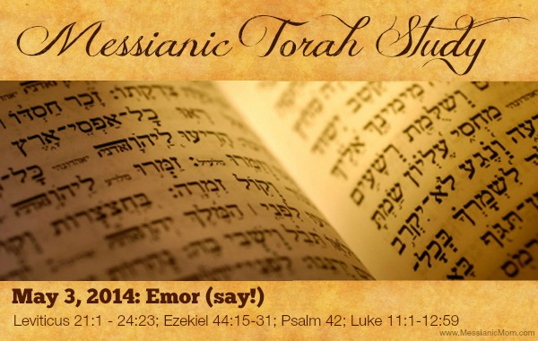 Torah Portion Emor